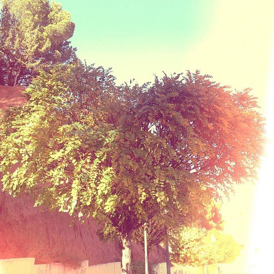 Love Autumm Tree