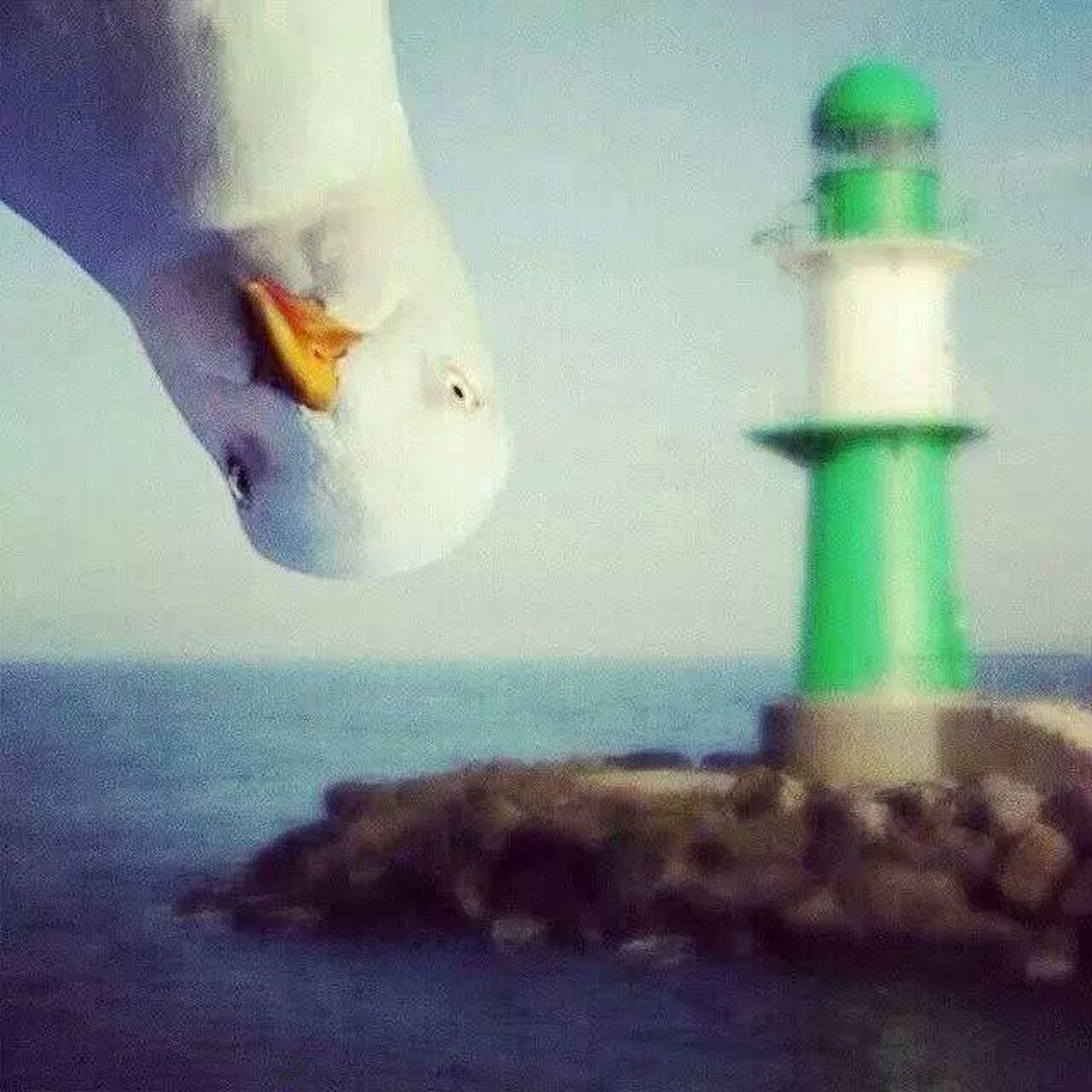 animal themes, bird, white color, one animal, wildlife, indoors, animals in the wild, close-up, blue, no people, seagull, flying, white, day, glass - material, two animals, nature, selective focus, wall - building feature, water