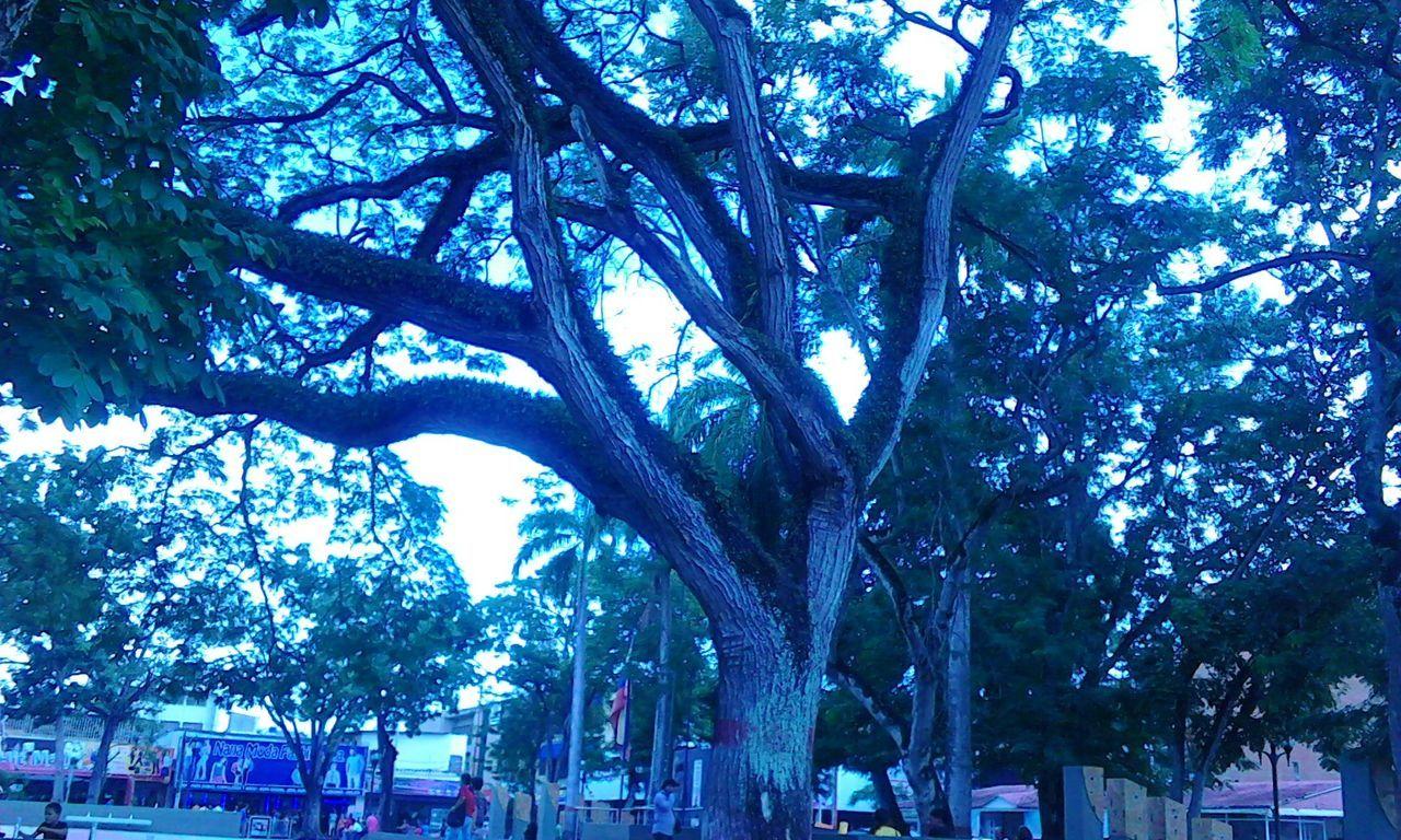 Abrazo De Arbol árbol Calma Espacios Caminos Venezuela Bella Maturín Plaza Conversar Natural Aire Libre