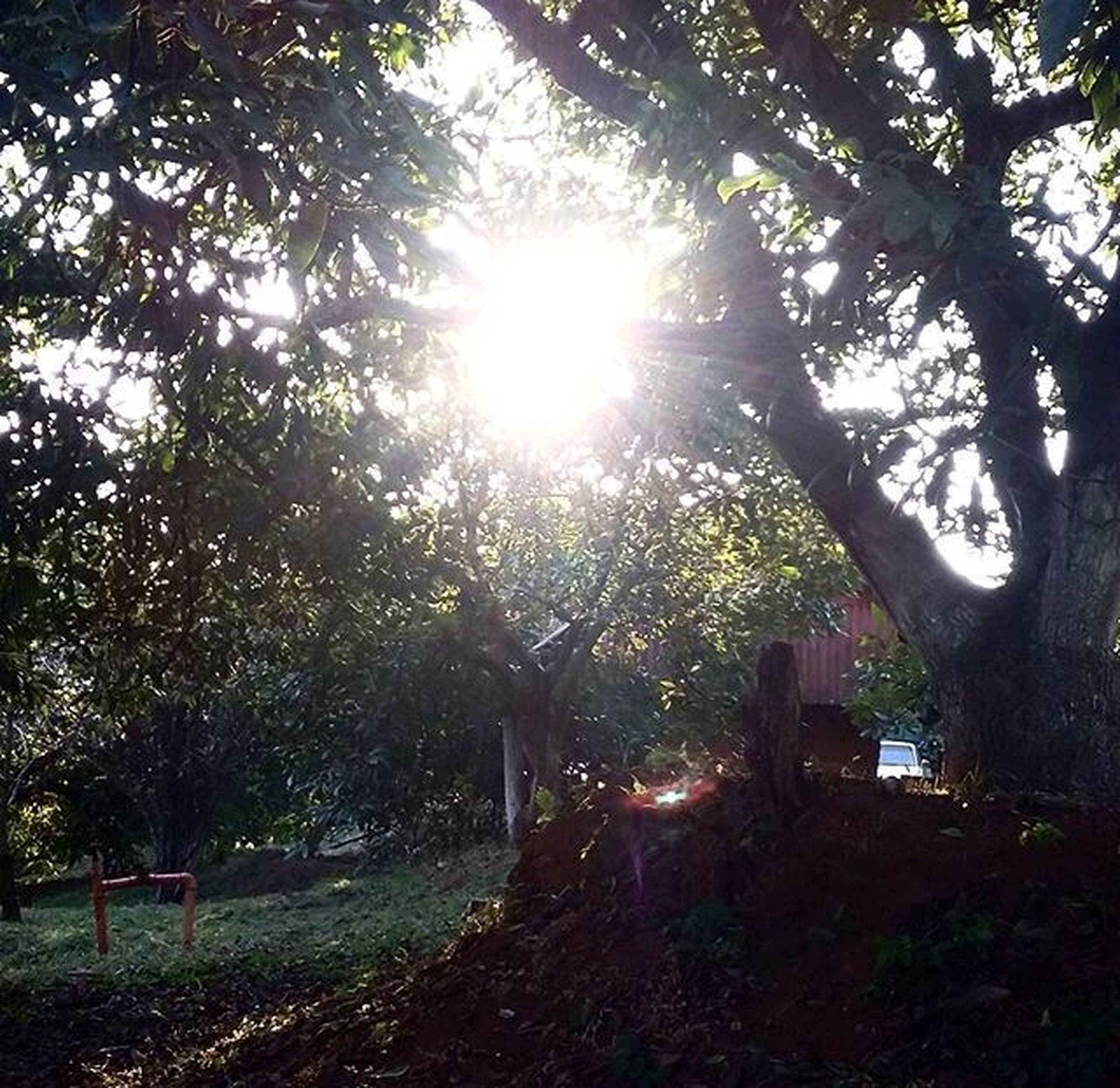 tree, sunlight, sunbeam, lens flare, growth, nature, sun, outdoors, tranquility, no people, beauty in nature, scenics, day