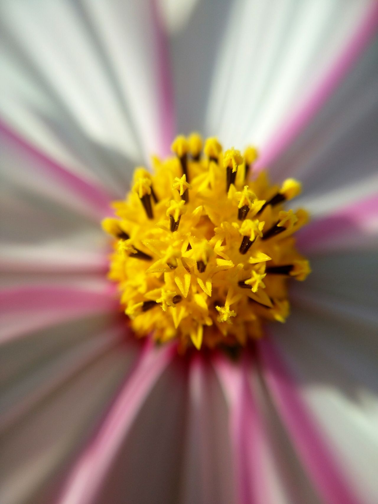 Pertect Masterpiece From God Flower Heart Pink Flower Yellow Center
