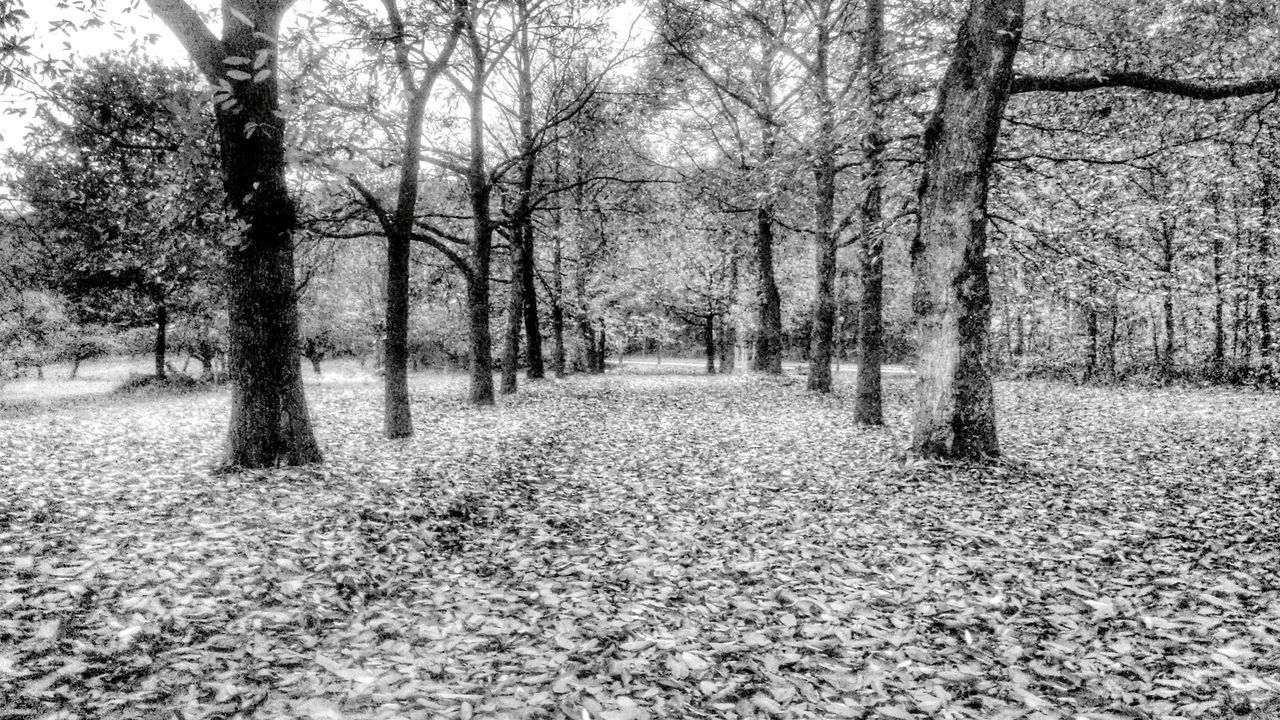 Der Weg Tree The Way Forward Nature Day Outdoors Tranquility No People Beauty In Nature Landscape Nature Photography [ Autumn🍁🍁🍁 Scenics Nature Idyllic Landscape Idyllisch Idylic Scene Blackandwhitephotography Black And White Collection  Schwarz & Weiß Blackandwhitephoto Way wandern Wandern 🌄 Plant