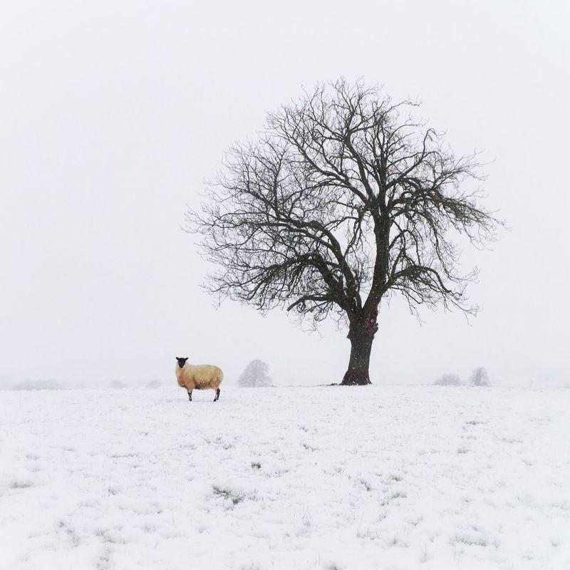 simplicity by Steve Turner