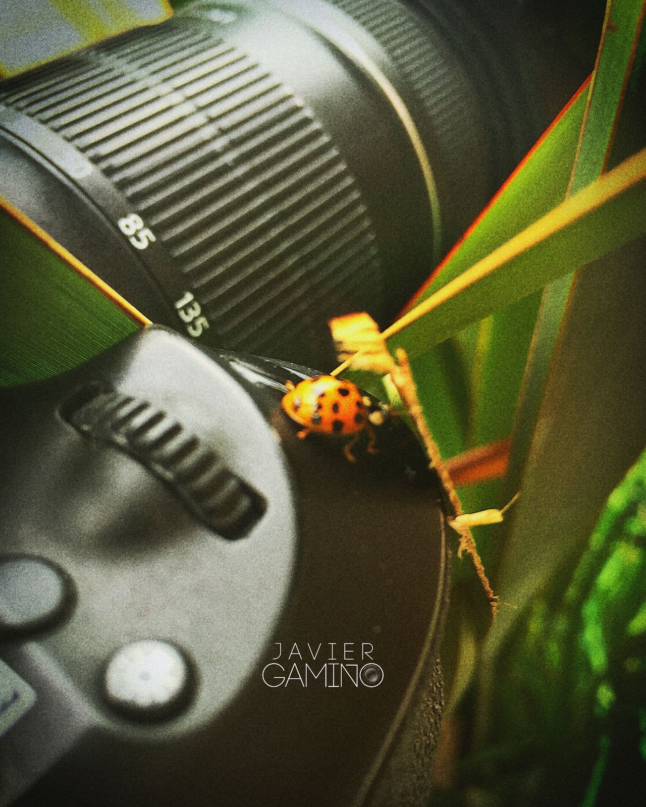 60d Arandas Camera Canon Close-up Ladybug Naruto Nature Selective Focus