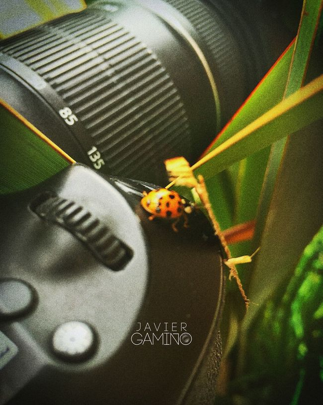 60d Arandas Camera Canon Close-up Ladybug Naruto Nature Selective Focus
