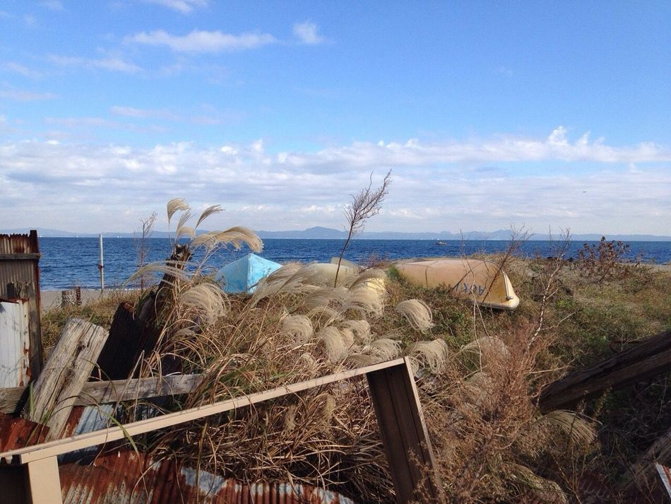 Sea Seascape Sky And Clouds Japanese Pampas Grass Boat No People Non-urban Scene Outdoors Beach Horizon Over Water Growth Grass Day Enjoying Life Hello World Check This Out Capture The Moment Getting Inspired Taking Photos EyeEm Gallery Eye4photography  Beachphotography From My Point Of View