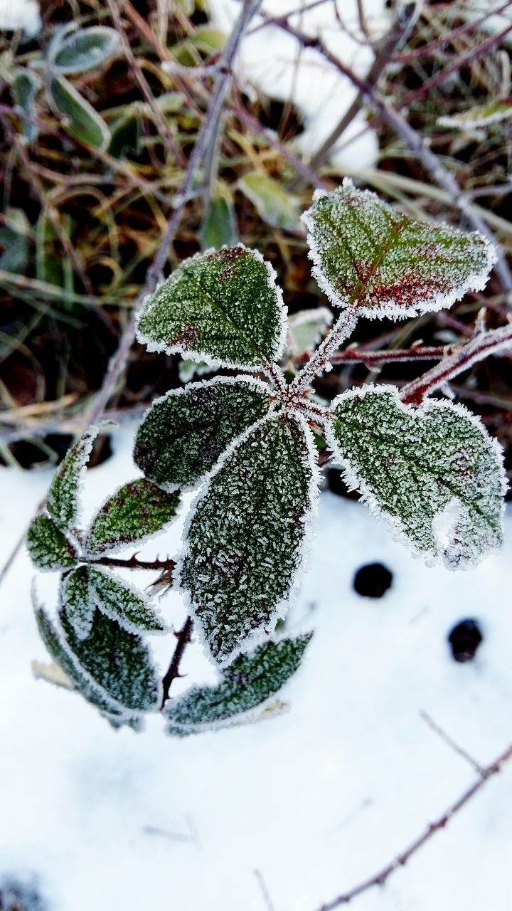 High Angle View Of Frozen Plant During Winter