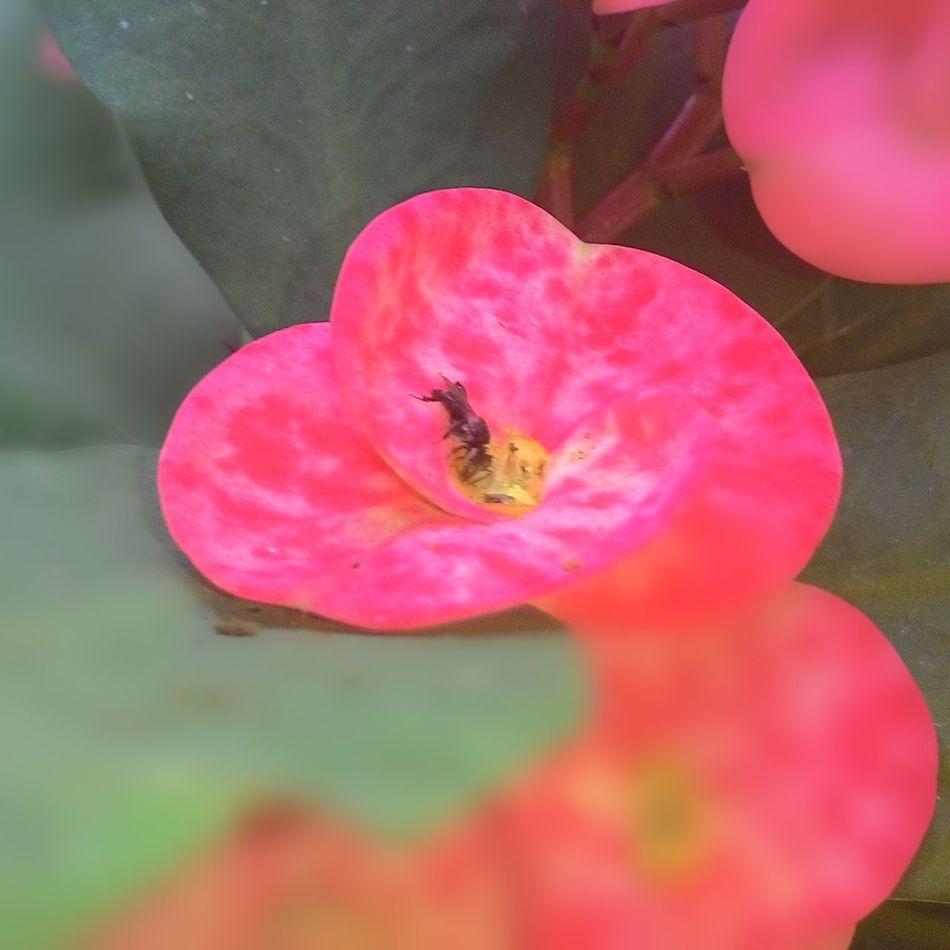 pink flowers Hello World EyEm Indonesia First Eyeem Photo Enjoying Life