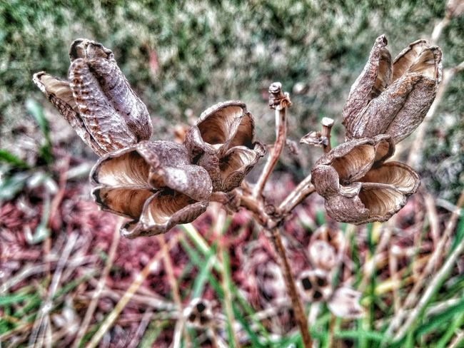 Nature_collection EyeEm Nature Lover Dead Flowers Circleoflife Likeit Follow4follow Focused