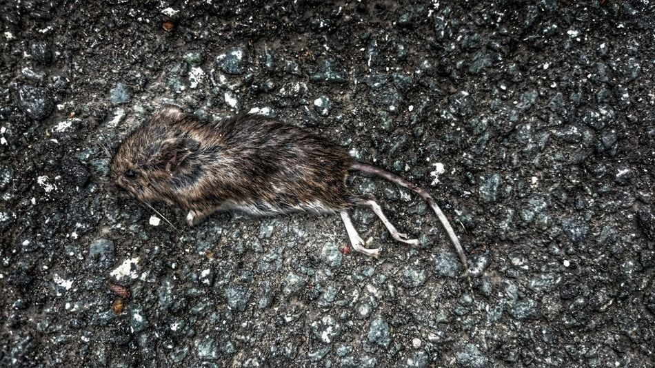 Another reason i dislike cats.. Sadness And Sorrow Baby Mouse Cat Kill Me Cat Life Pathways Death Death & Decay Furbabies Furryfriend Dead Animal Dead Mouse Killed It With Ease Death Nature LifeLess Taking Photos Vermin Pest Control Pest Pests