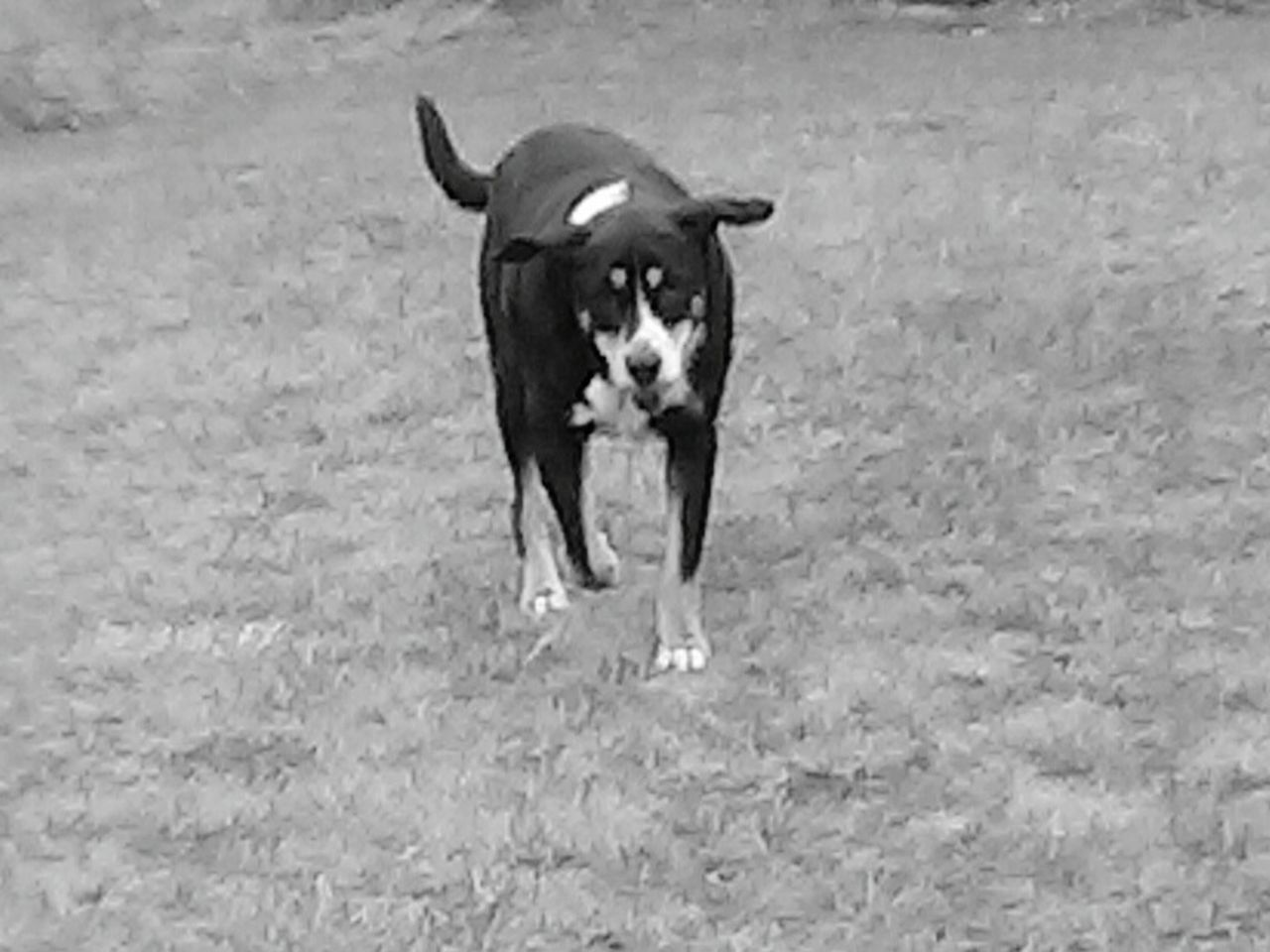 Black And White Stormy Girl Hanging Out Enjoying Life Crazy Weather Dog