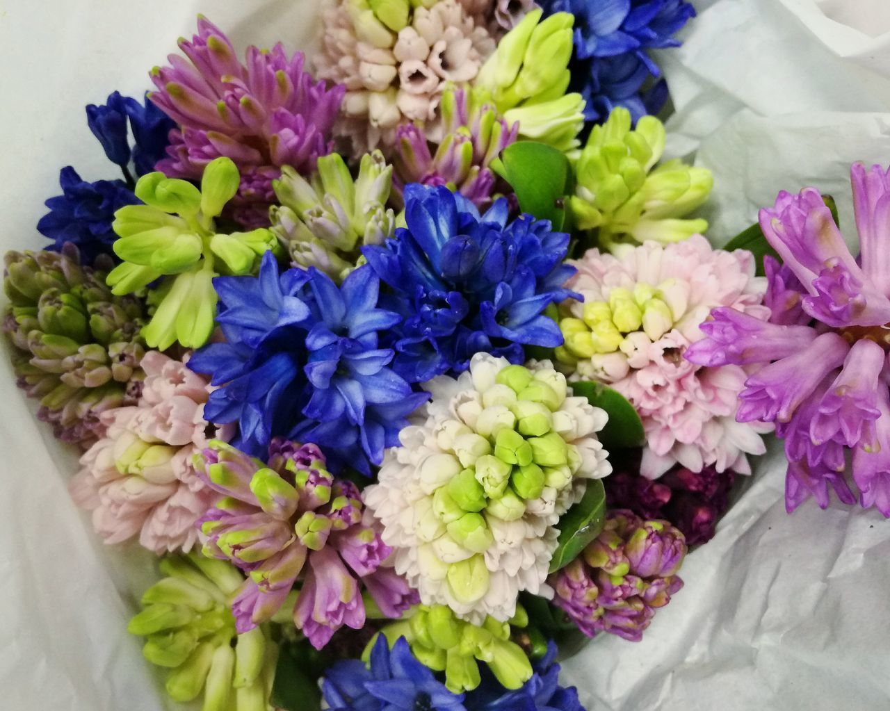 Flower Freshness Fragility No People Hyacinth Multi Colored Beauty In Nature Nature Flowers Hyacinths Hyacinth Flower EyeEm Diversity