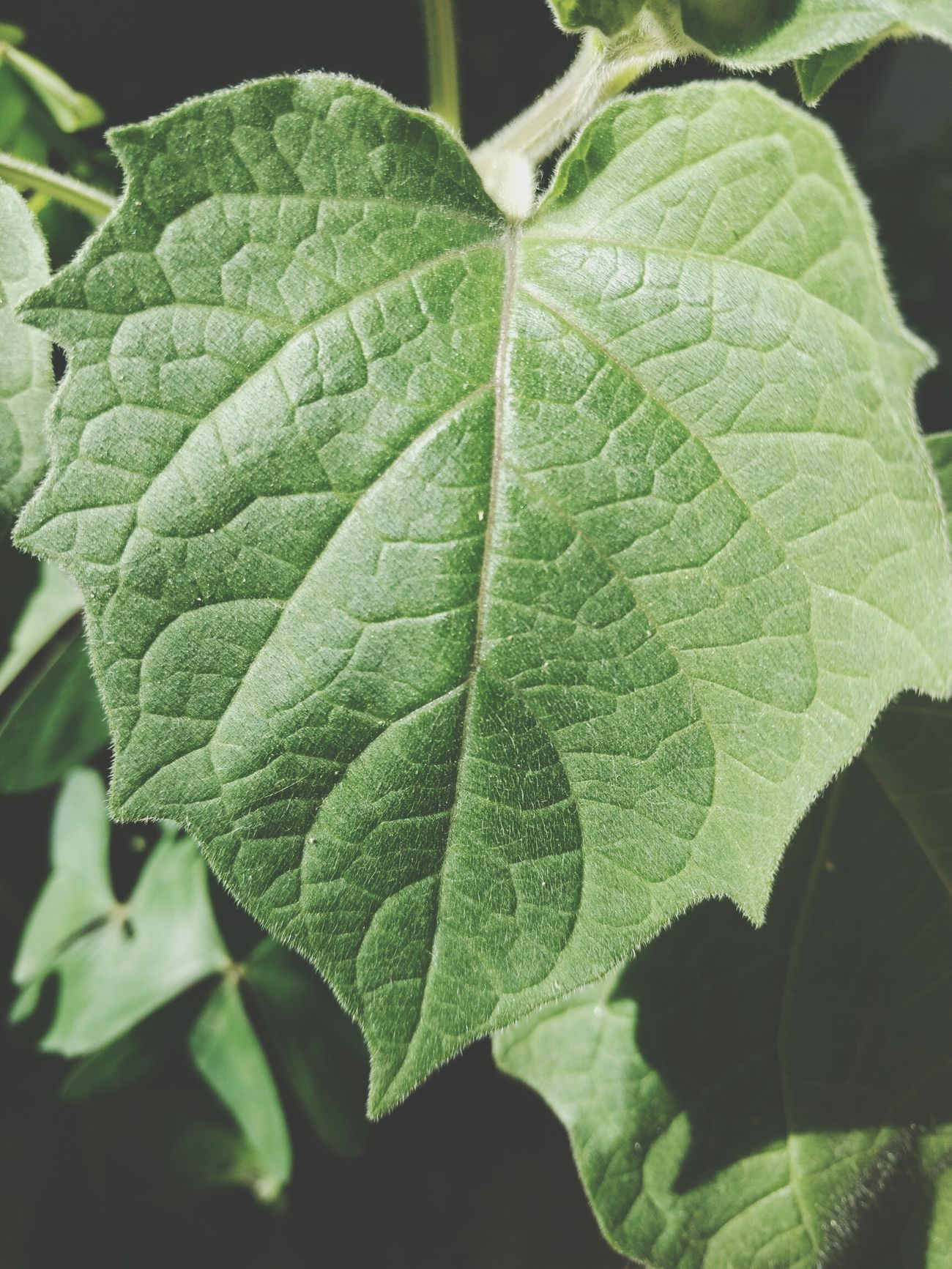 Green Color Leaf Freshness Plant Leaf Vein Close-up Nature Growth Beauty In Nature No People Outdoors Water Tree Day Huawei P9 Plus Huawei P9. My Year My View Mision  Misiones Huaweiphotography Mision  My Flower Nature Clear Sky