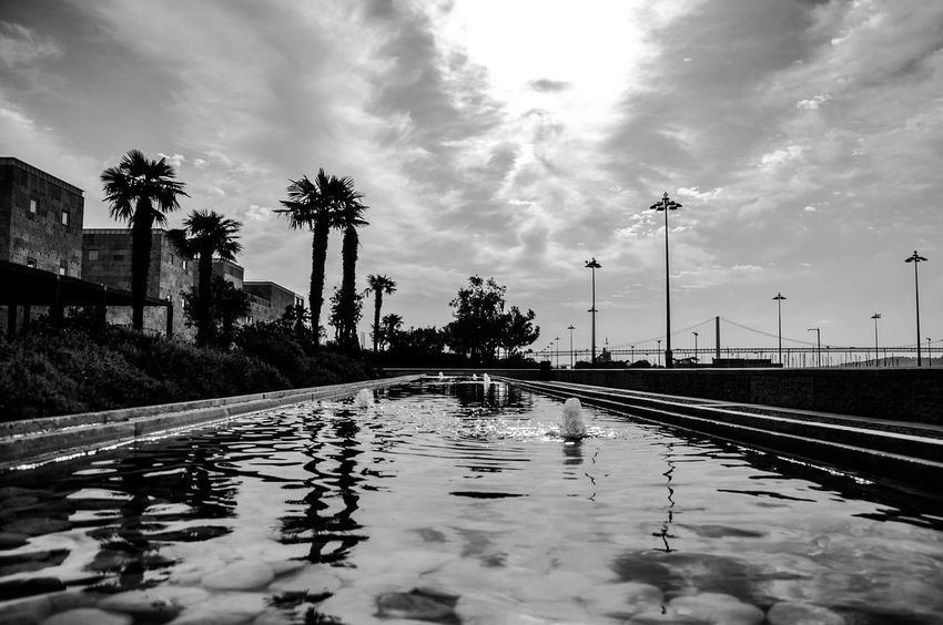 Cloud - Sky Day Nature No People Outdoors Palm Tree Puddle Reflection Sky The Way Forward Transportation Tree Water