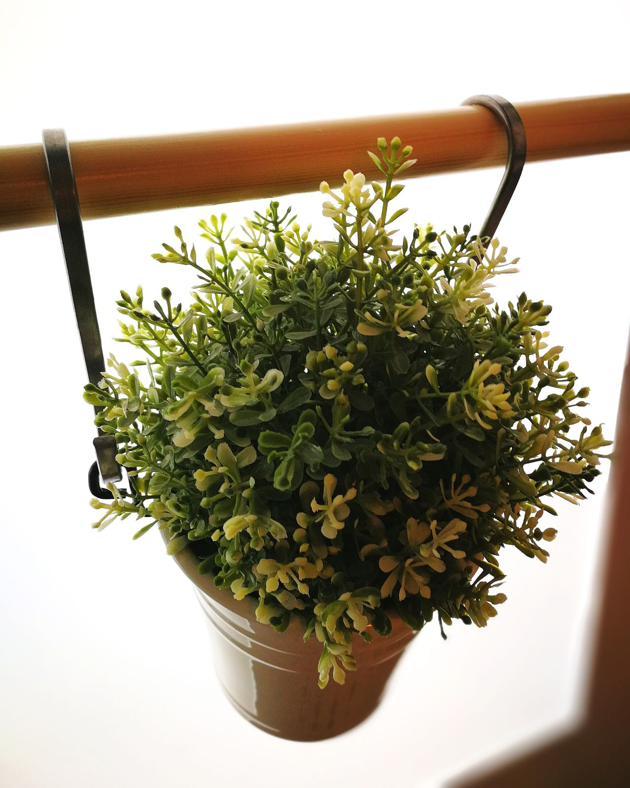 Growth Plant White Background Indoors  Nature Day Freshness Artificial Hanging Planter