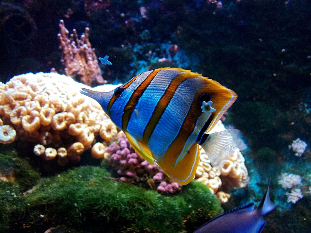 Aquarium Aquarium Life Aquatic Color Fish Fish Pesce Acquario Acqua Colorato Mondo Marino Animal Animals Animal Photography Fishs Pesci Coral Coralli Hello World EyeEm Gallery EyeEm Animal Lover Animali Water EyeEm Best Shots EyeEm Best Edits Nature's Diversities