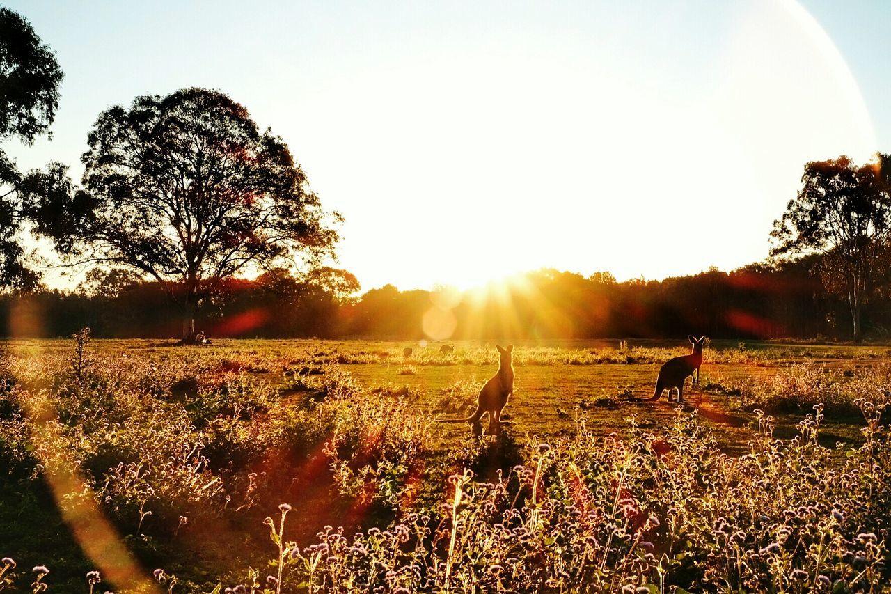 Golden Hour....Aussie style. Sunset Silhouette Landscape Sunlight Beauty In Nature EyeEm Nature Lover Nature Golden Hour Goldensunset EyeEm Best Shots - Landscape EyeEm Sunset Collection EyeEm Travel Photography Travel Destinations