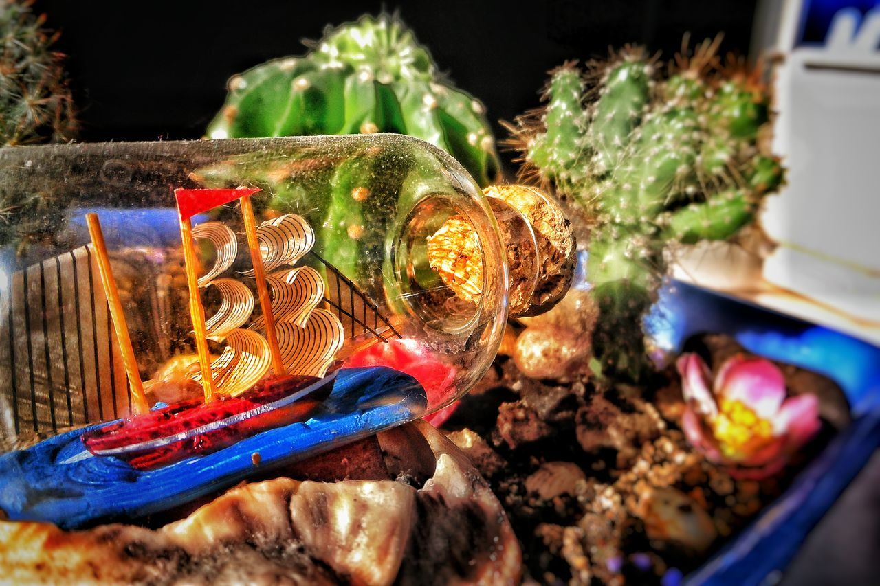 Bottle Cactus Cactus Flower Capture The Moment Christmas Decoration Close-up Day Decoration Dream In Detail Sculpture Ship Ship In A Bottle