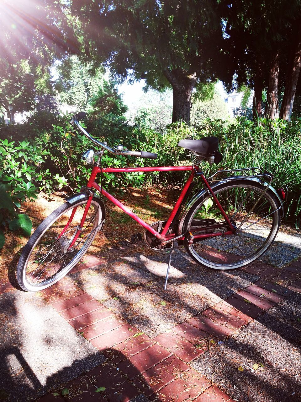 bicycle, sunlight, growth, no people, nature, outdoors, tree, day