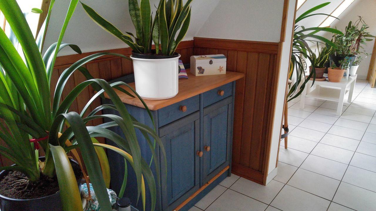 Zimmerpflanze Flur Fliesen Massivholz No Filter