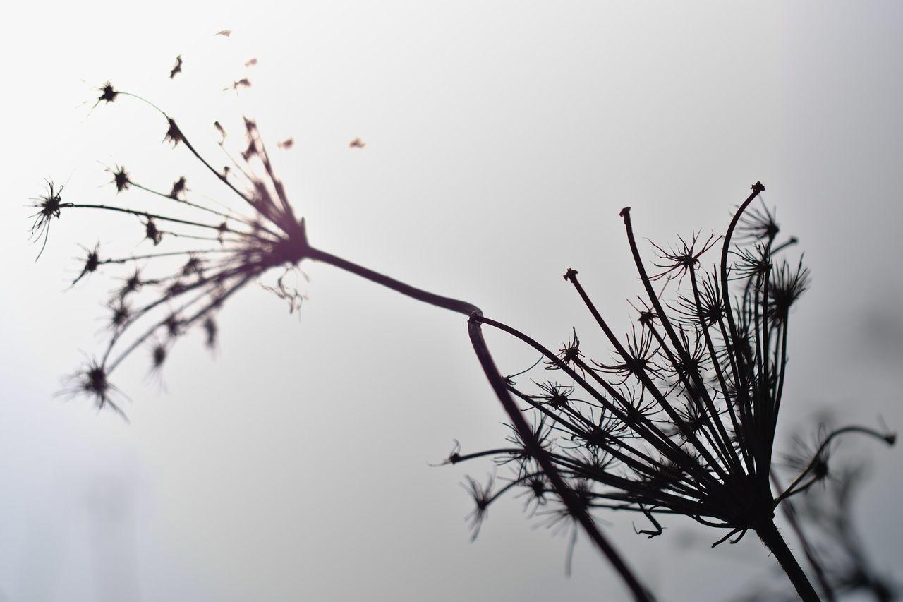 "Branch Contre-jour Shot Dead Plant Dry Fragility Low Angle View Nature Outdoors Tree Projet 52 semaine 09 ""contre-jour"""