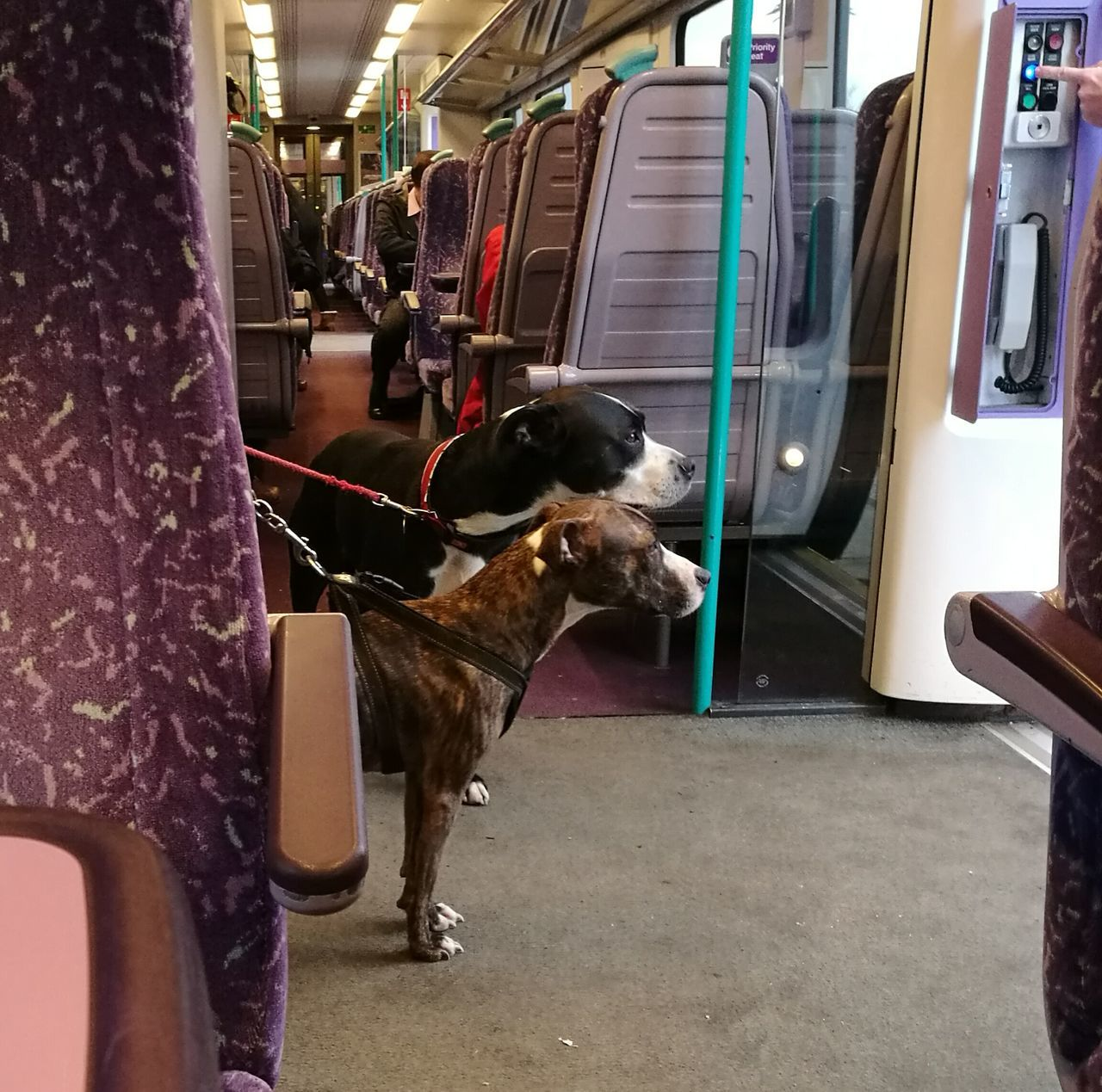 Dogs On The Train Domestic Animals Mammal Pets Men Low Section Adult Indoors  Adults Only One Person People Day