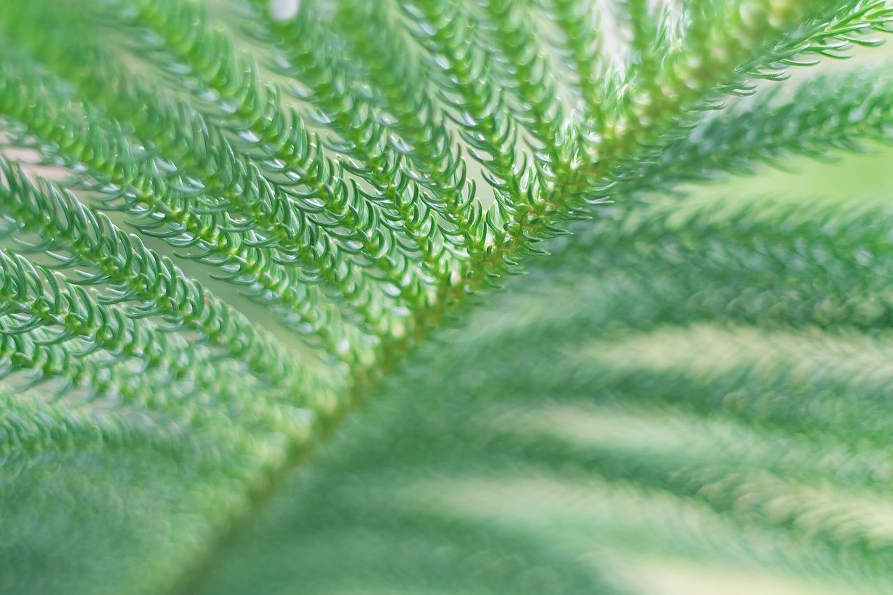 green color, close-up, full frame, selective focus, no people, leaf, pattern, nature, plant, day, fragility, indoors, backgrounds, fern, beauty in nature, freshness