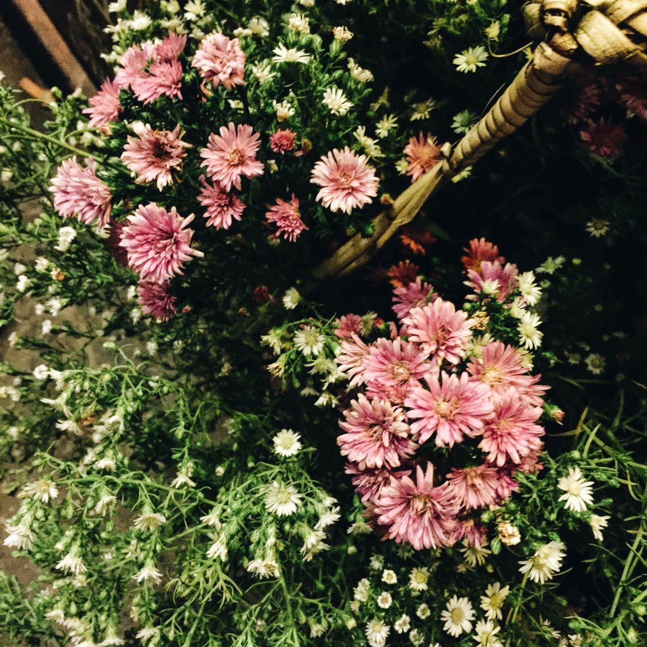 Hoi An Flowera:y] Daisya:freshness] Speciality Of Vietnam