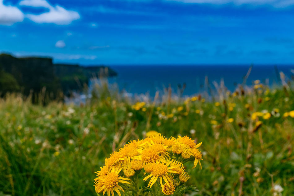 Beautiful stock photos of ireland, Beauty In Nature, Blooming, Cliffs Of Moher, Close-Up