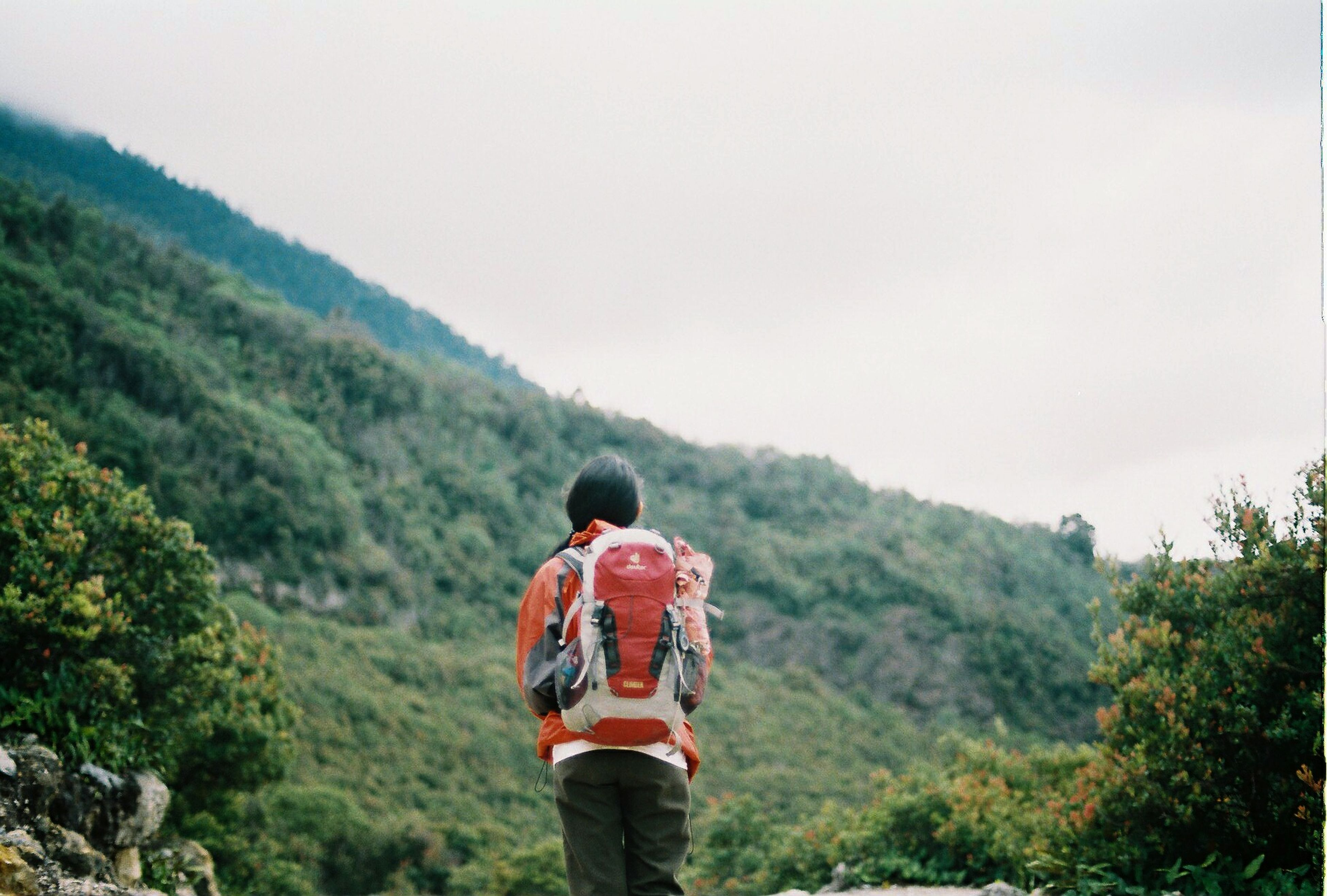 rear view, backpack, real people, tree, walking, adventure, nature, mountain, one person, hiking, casual clothing, leisure activity, day, landscape, beauty in nature, outdoors, clear sky, sky, scenics, men, young adult, people