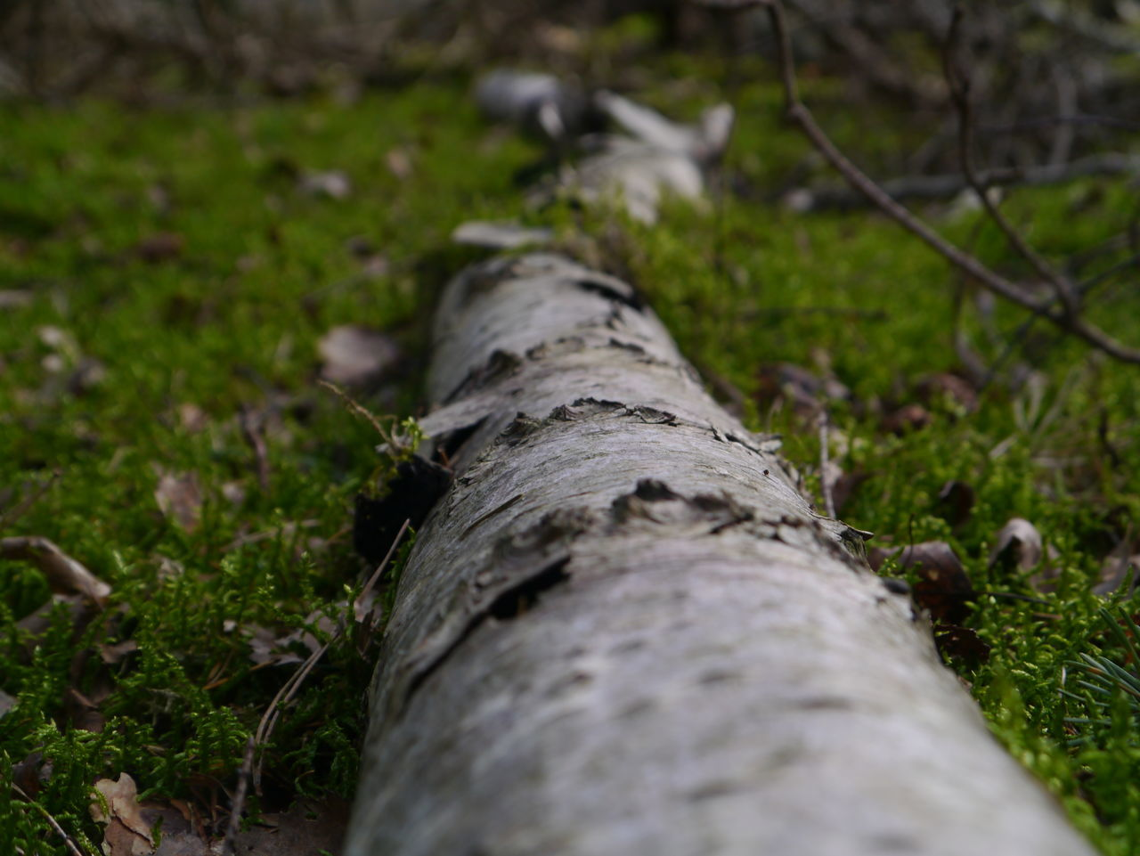 Close-up Day Deforestation Fallen Tree Forest Grass Landscape Log Nature No People Outdoors Textured  Timber Tree Tree Ring Tree Trunk Wood - Material