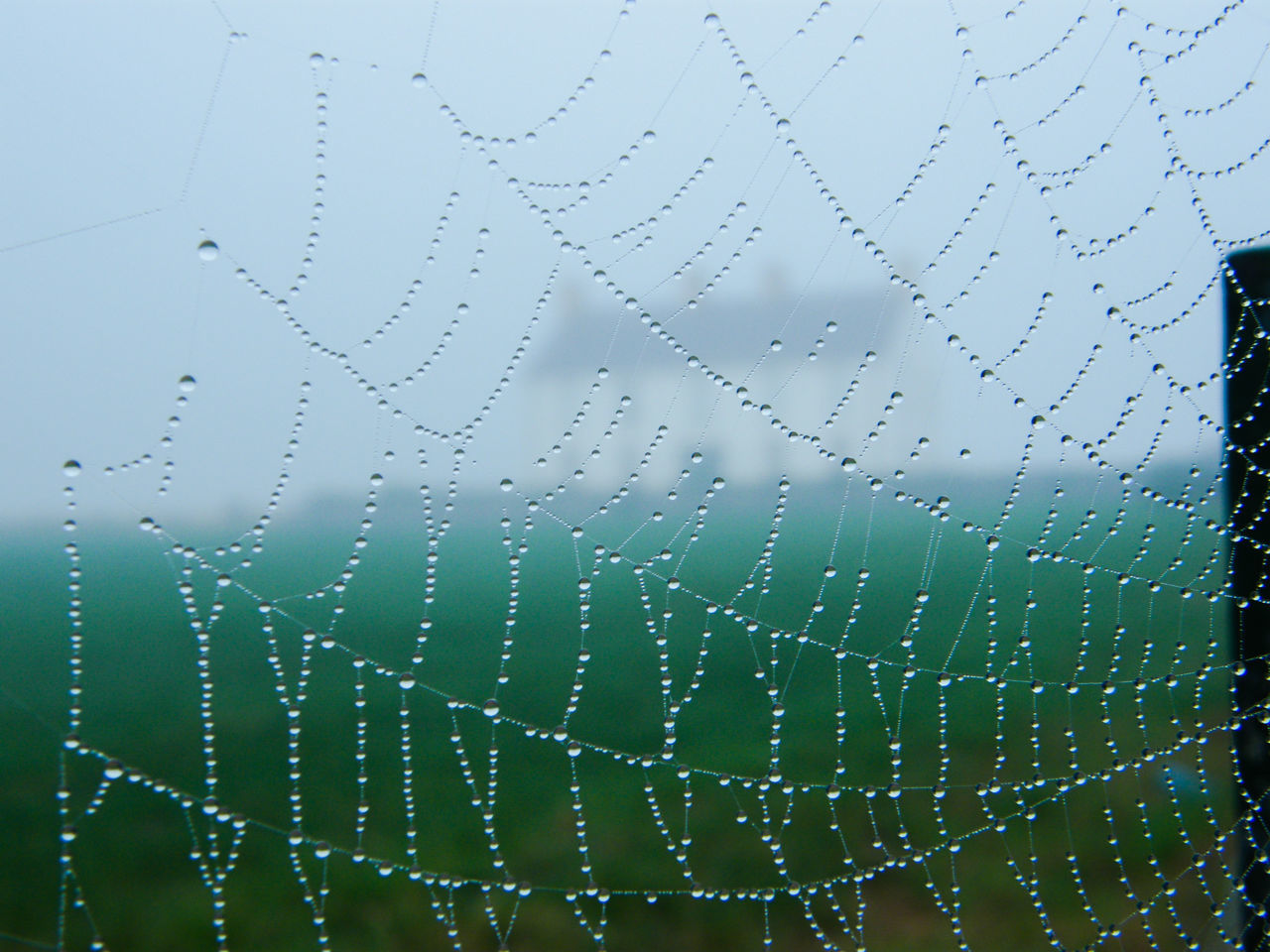 Animal Themes Backgrounds Beauty In Nature Close-up Day Dew Dew Drops Dew Drops On Spider Web Drop Foggy Morning Fragility Full Frame Misty Misty Morning Nature No People Outdoors Sky Spider Spider Web Water Web