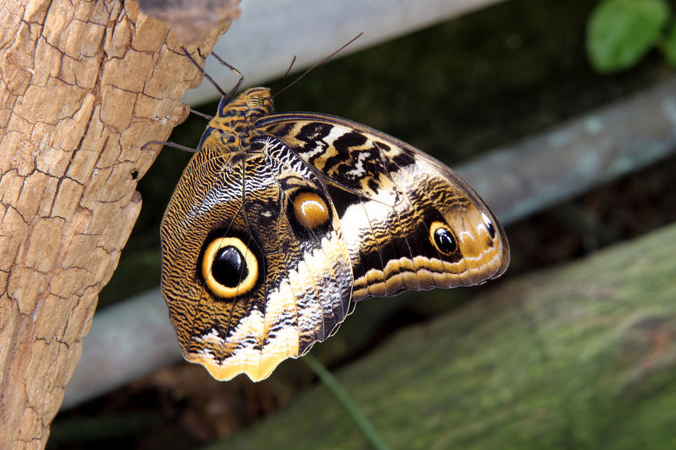 Butterfly Butterfly - Insect Butterfly Makro Butterfly Park Butterfly Wings Insect Macrophotography Insect Photography One Animal