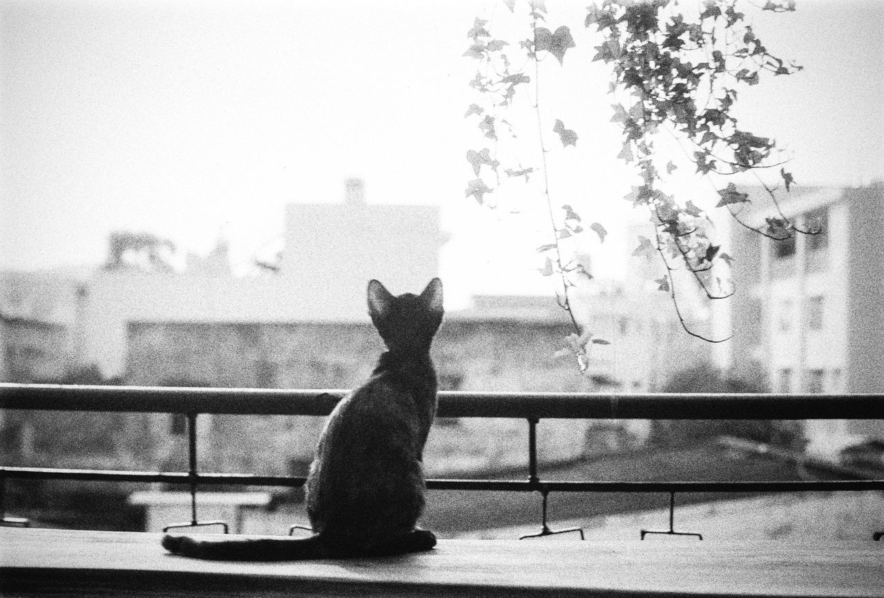 I shoot film ;) Animal Themes Animal Wildlife Bnw Bnw_captures Bnw_friday_eyeemchallenge Cat Focus On Foreground Hoang Ann Meow One Animal Week On Eyeem