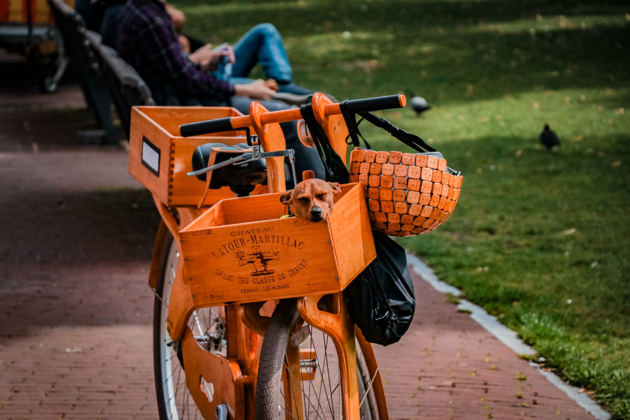 Sausage dog having a nap Amsterdam Napping Nature Netherlands Animal Basket Bicycle Bicycles Break Day Dog Dog Nap Focus On Foreground Nature Outdoors Park People In The Park Sausage Dog Sun Transportation Wooden Bike The Week On EyeEm The Week On EyeEm