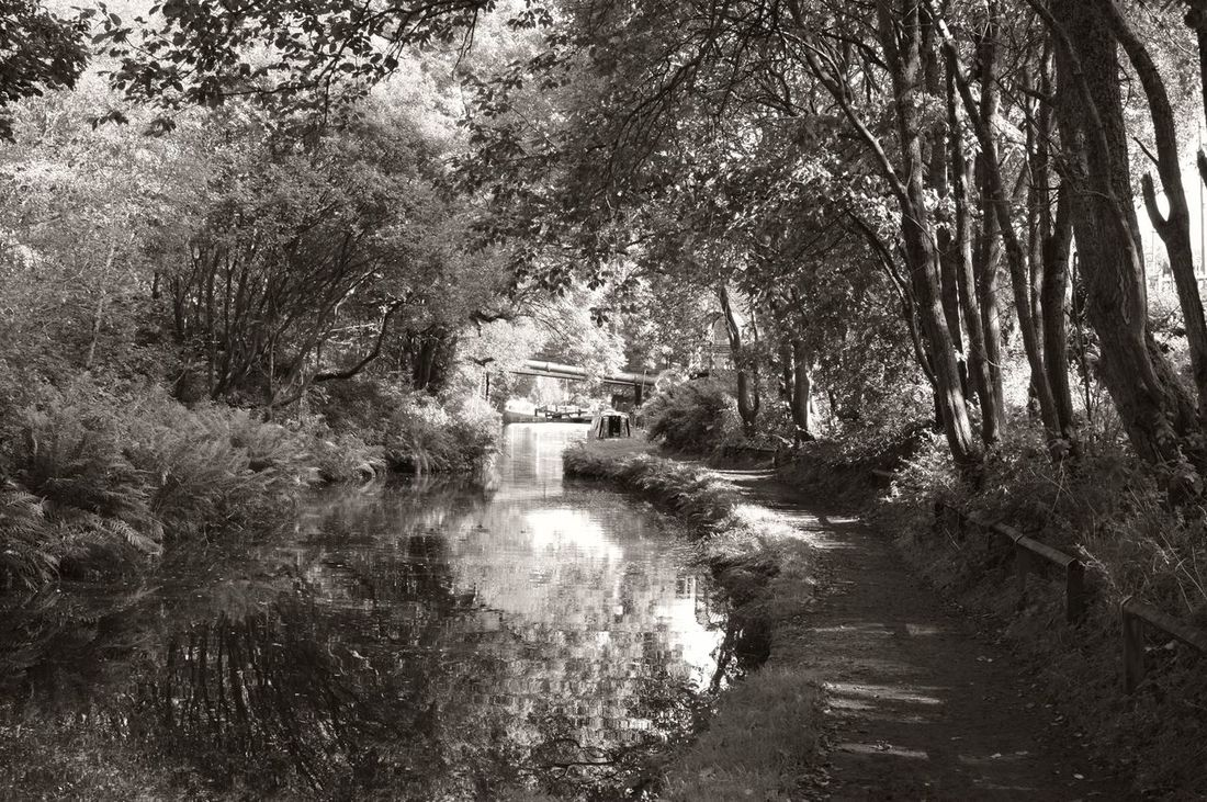 Tree Nature Water Day Growth No People The Way Forward Outdoors Scenics Beauty In Nature Countrywalks Yorkshire EyeEmNewHere Blackandwhite Photography Blackandwhite Country Life Countryside Canal