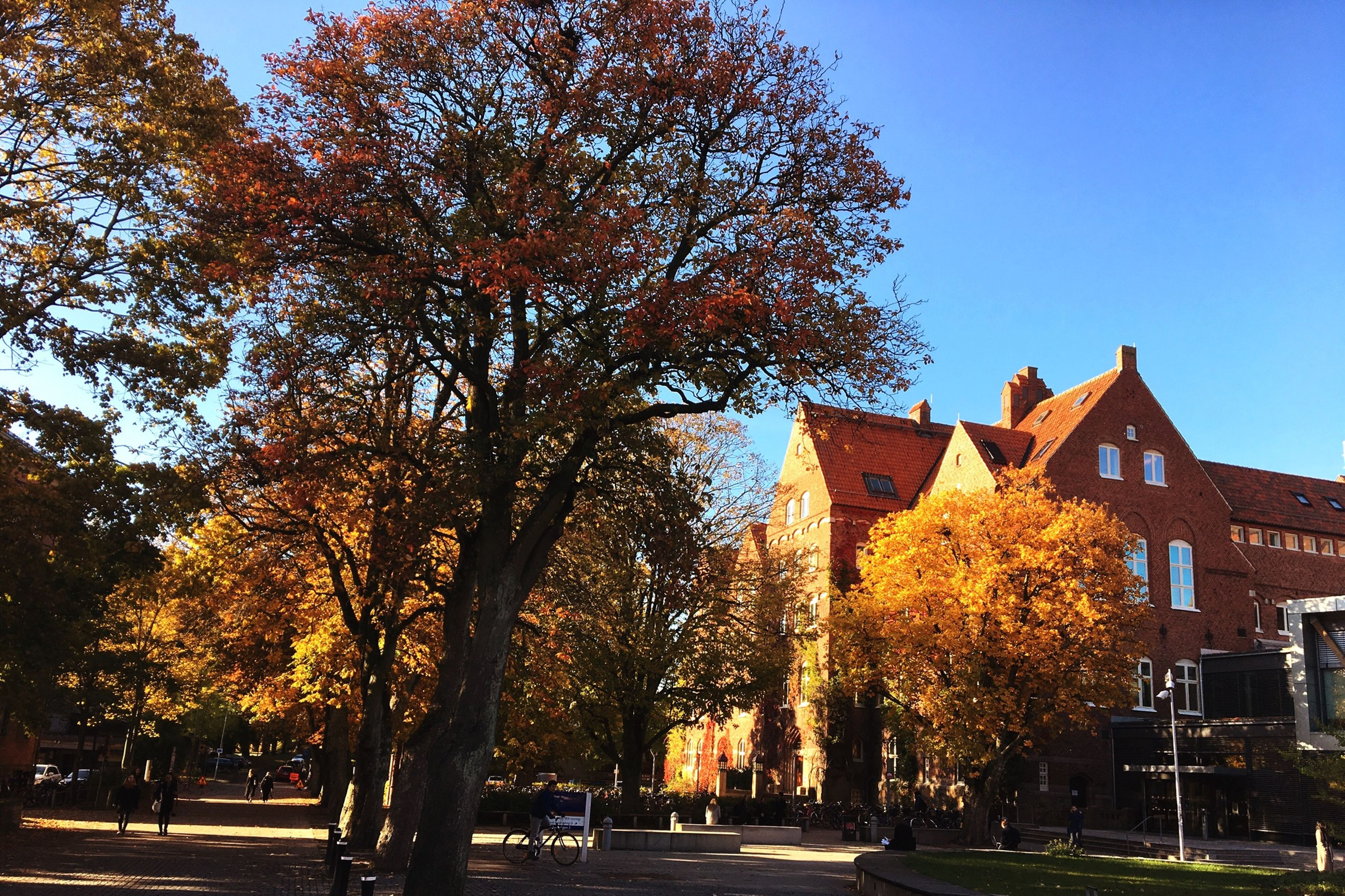 tree, architecture, built structure, building exterior, clear sky, change, road, autumn, blue, street, outdoors, growth, day, tall, tall - high, long, footpath, tranquil scene
