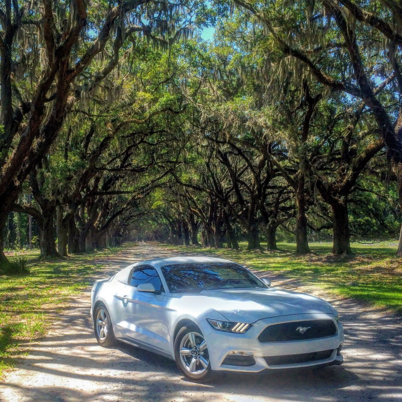 Tree Car Transportation Land Vehicle Mode Of Transport Sports Car Nature No People Outdoors Day Ford Mustang Ford Mustang 2015  Photography Photooftheday History Savannah Georgia