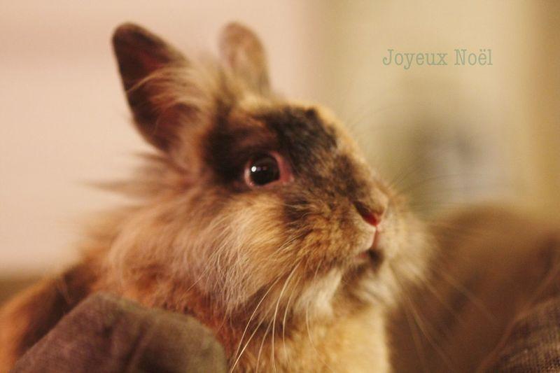 Animals Christmas Noël Rabbit