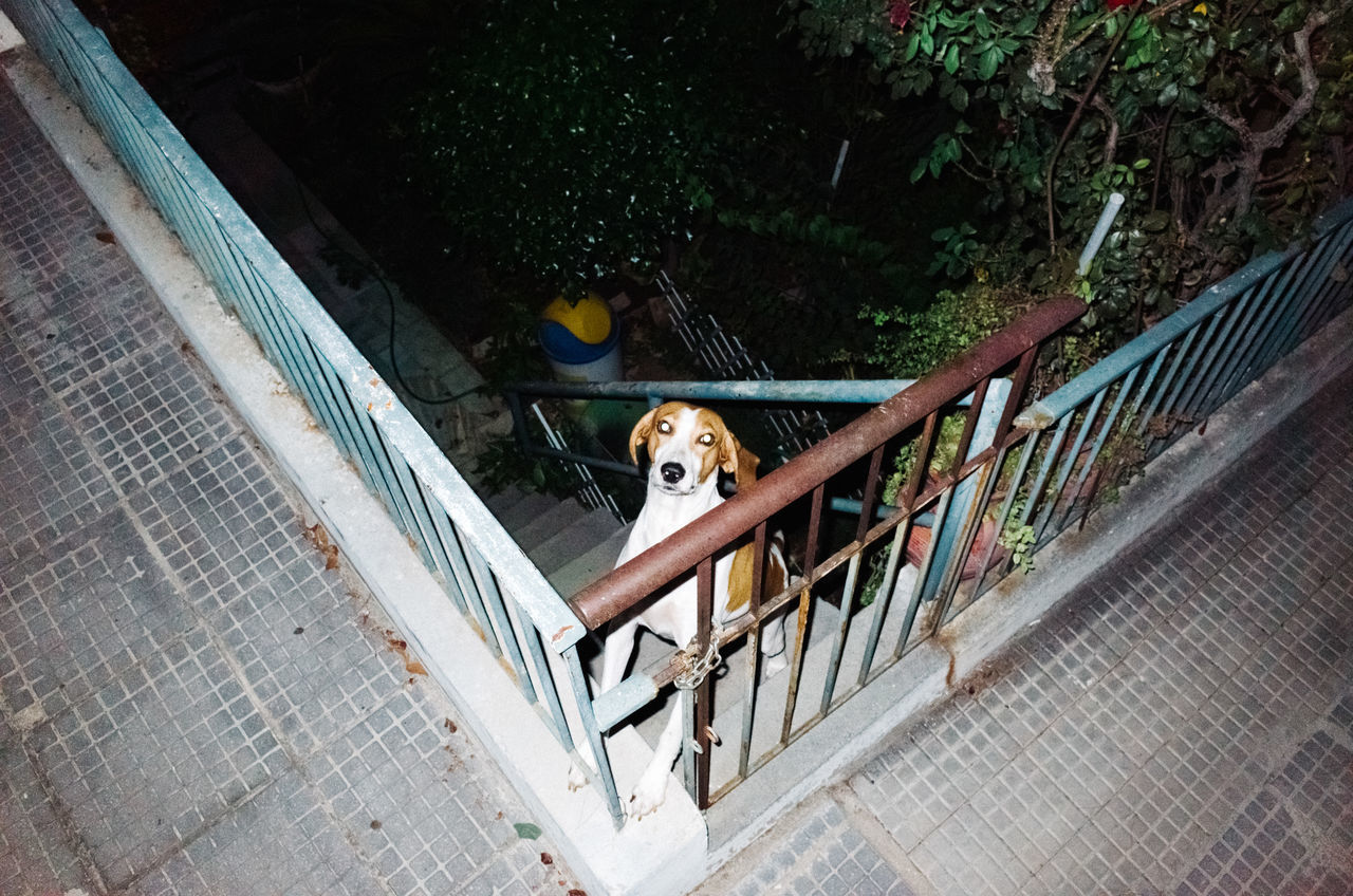 abyss Alone bridge bridge - man made structure casual clothing day dog domestic animals flash high angle view Lonely Looking At Camera mammal night one animal outdoors pets Railing relaxation Sitting Stairs Standing surreal togetherness young adult