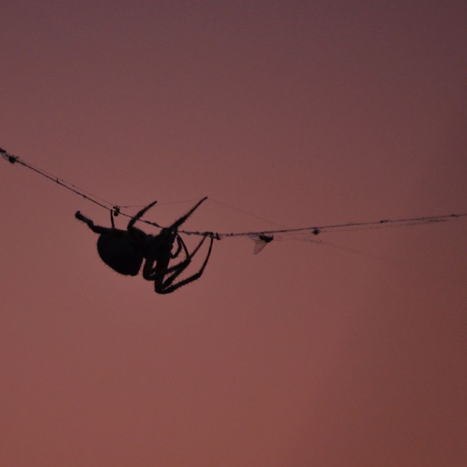 Beautiful stock photos of spider's, Animal Themes, Animals In The Wild, Clear Sky, Copy Space