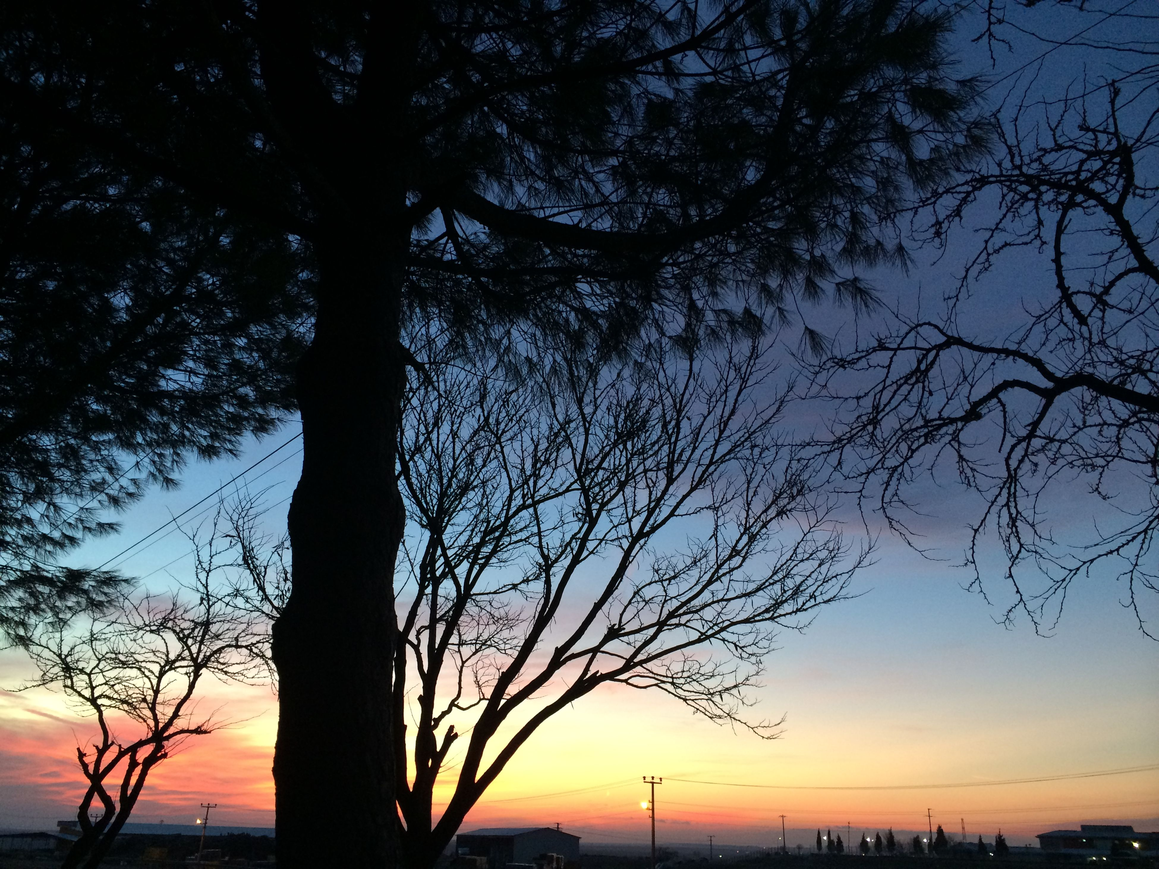 silhouette, sunset, tree, tranquil scene, branch, scenics, tranquility, tree trunk, beauty in nature, growth, nature, orange color, sky, outdoors, cloud, outline, majestic, tall, vibrant color, non-urban scene, no people, solitude, remote, moody sky