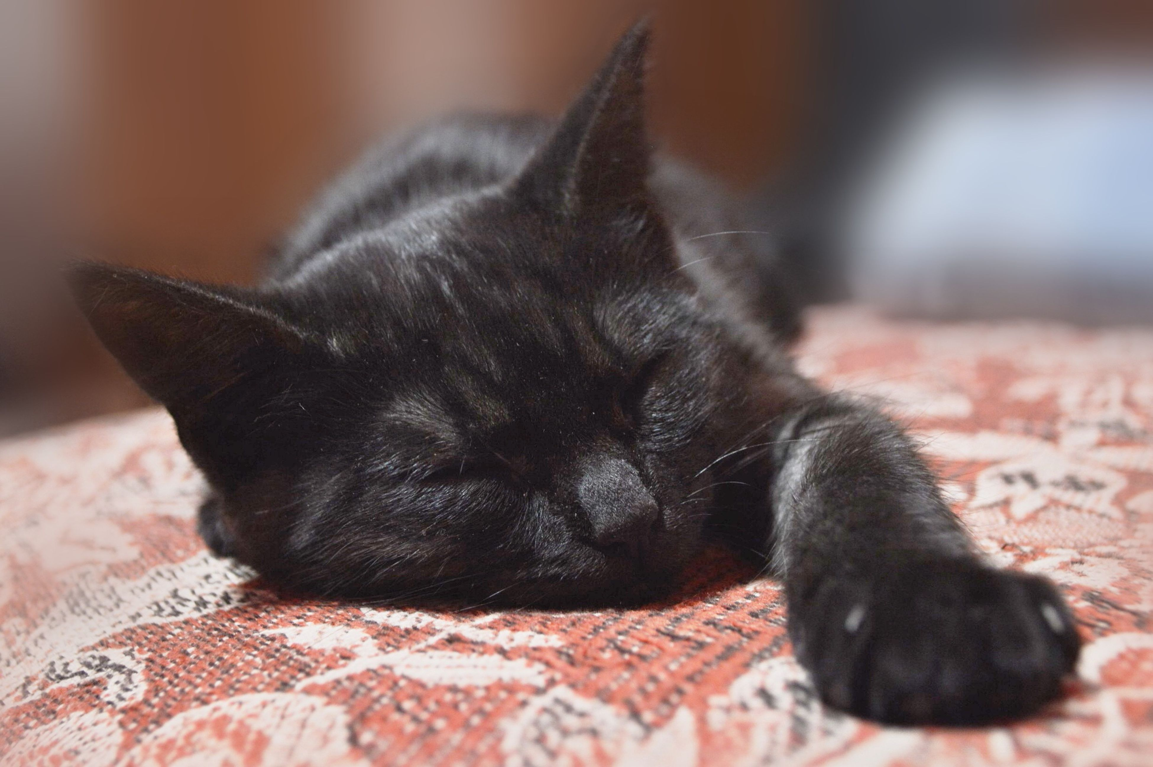 animal themes, pets, one animal, domestic animals, mammal, relaxation, close-up, indoors, focus on foreground, resting, domestic cat, lying down, black color, animal head, feline, whisker, selective focus, cat, sleeping, relaxing