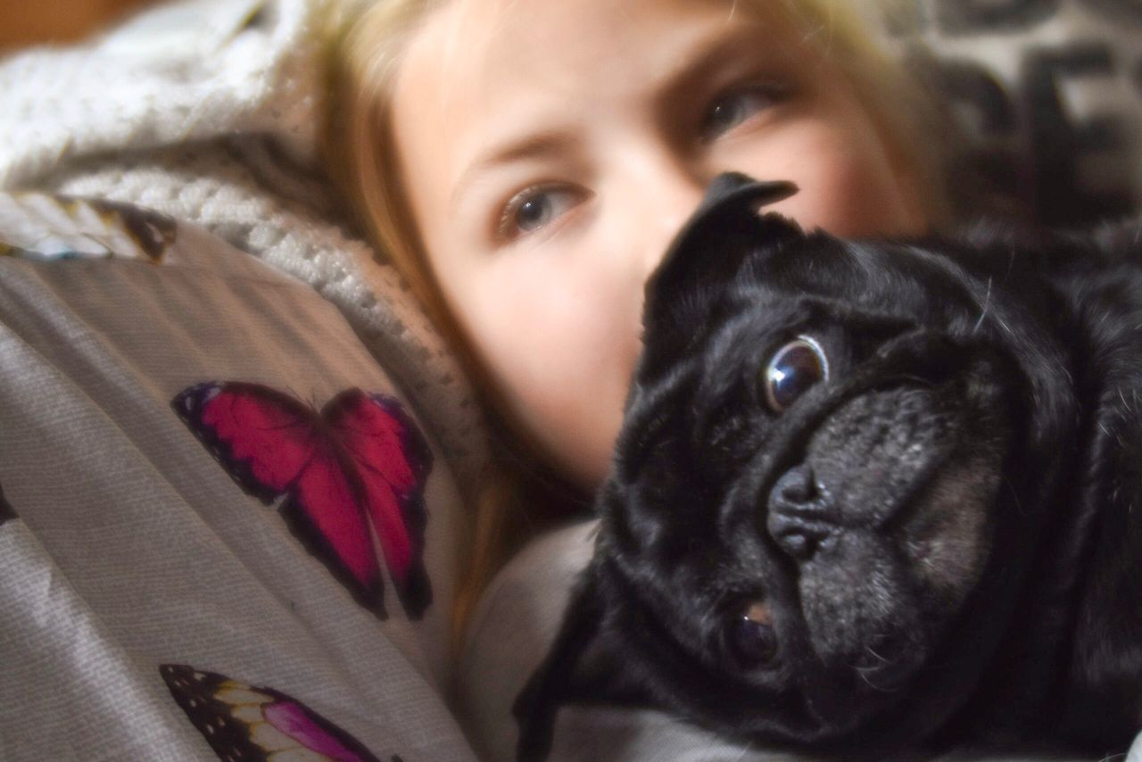 Sofa cuddles Always Be Cozy Looking At Camera Portrait Lying Down Cute Dog Childhood Real People Close-up Indoors  Cuddle Pet Pets Corner Dogs Of EyeEm Pug Pug Life  Black Pug Soft Focus Enjoy The New Normal