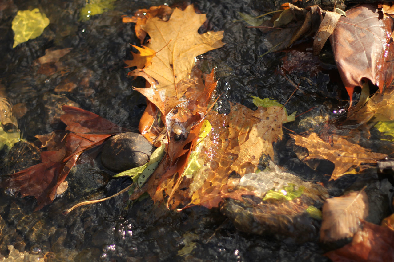 Beauty In Nature Close-up Day Fall Fall Colors Fall Leaves Golden Hour Golden Light Ground Leaves Leaves In Stream Leaves In Water Light Nature No People Outdoors Reflection Selective Focus Stream Sunlight Water