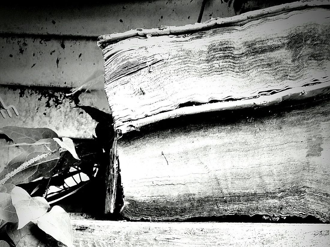 Black & White Weathered Books Waterlogged, the Knowledge Lost Never Ever, Read Between The Lines, Turn The Page, Open Your Mind