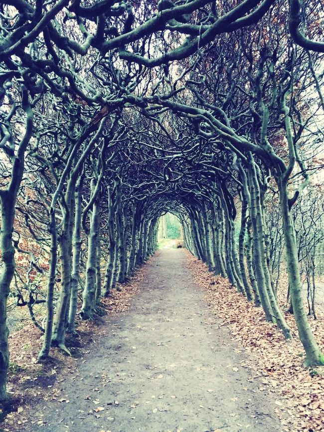 Passage Of Time Tunnel Vision Lonely Road Melancholic Landscapes Arches & Lanes Quiet Place  The Netherlands Dutch Countyside Old Trees
