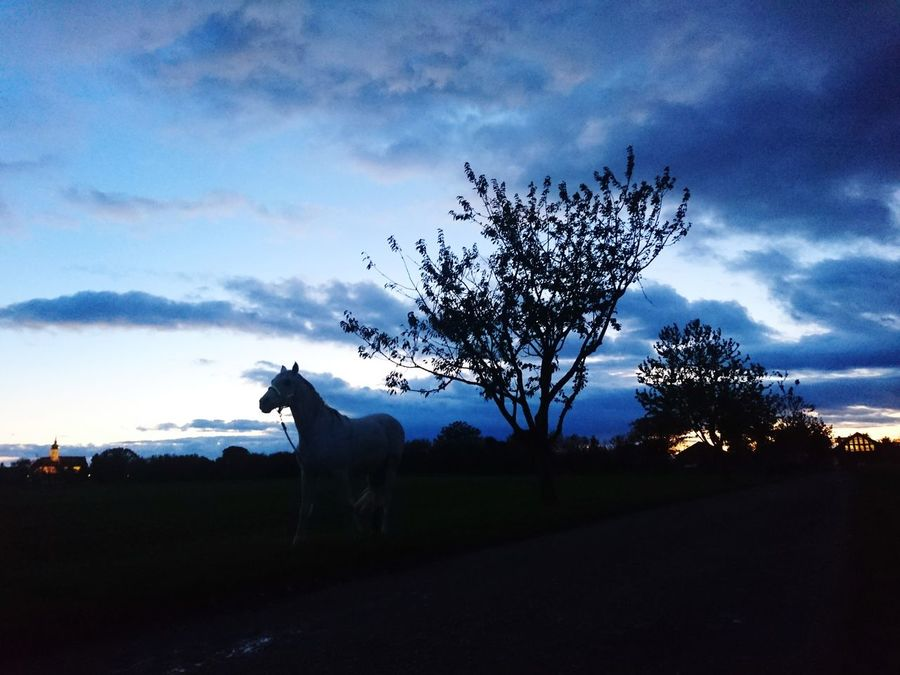 Silhouette No People Outdoors Nature Cloud - Sky Sunset Light And Darkness  Landscape Enjoy The View Taking Photos Gerasdorf Tree Horse Silhouette Horse Sunset Silhouette Austria Beauty In Nature Sunset Lovers Animal Wildlife Sky