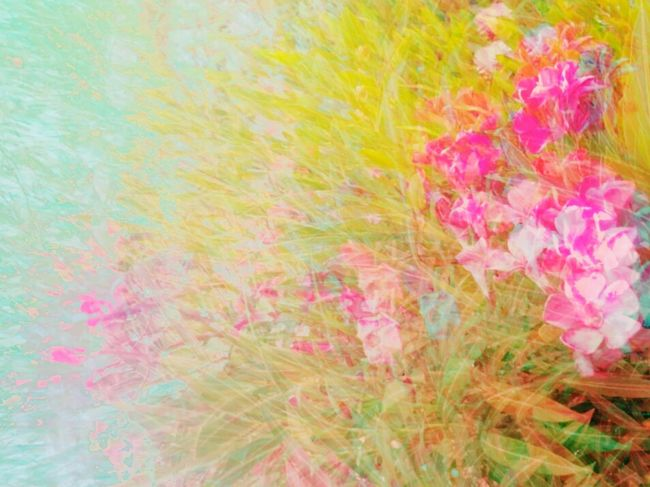 Hello World Check This Out Taking Photos Workout Goforawalk Enjoying Life MyCrazyBeautifulLife Ees✨ Sunset_collection Imusthaveit Flowers, Nature And Beauty Nature_collection Soft Grunge Check This Out MyStyle👌
