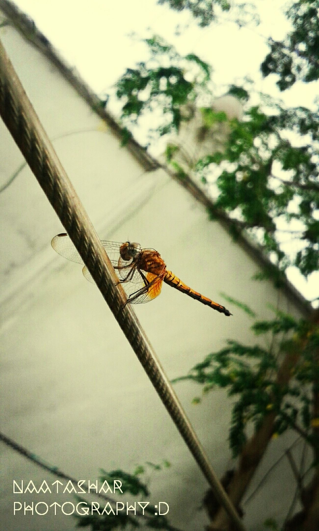 OPEN YOUR WINGS ! Dragonfly Iseeilikeisnap Naturelovers Nature_collection
